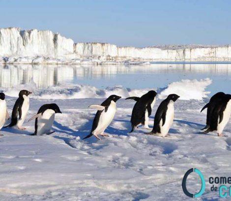 que-es-penguin-40